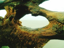 Moss Covered Driftwood At Beach