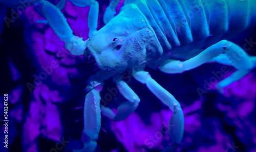 Fotografija Cropped Image Of Blue Scorpion