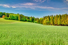 Summer Landscape With Green Gr...