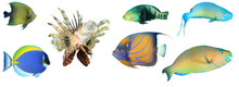 Sea Fish Isolated. Collection ...