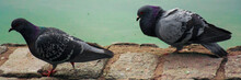 Black Raven On The Ground