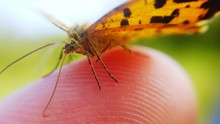 Close-up Of Butterfly On Human Finger
