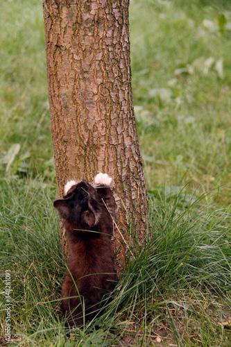 Obraz Mały kotek, nauka wspinania na drzewo - fototapety do salonu