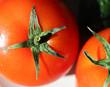 isolated ripe tomato close up