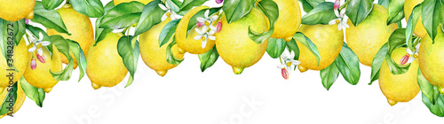 Watercolor illustration of blooming lemon tree branches.