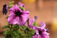 Letnie Kwiaty Sezonowe