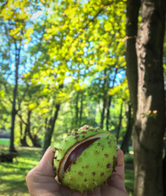Cropped Hand Holding Fruit In Forest