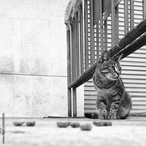 Cat Sitting On Street By Metallic Barricade Fototapeta