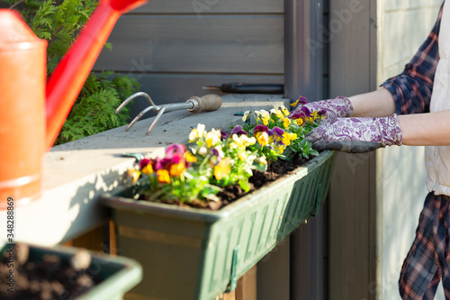 Valokuva Gardeners hands planting flowers in pot with dirt or soil in container on terrace balcony garden