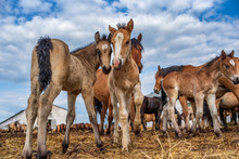 Village Horses Stand In The Ba...