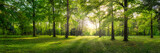 Fototapeta Na ścianę - Panoramic view of a forest with sunlight shining through the trees