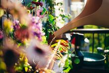 Female Gardener Waters Flowers...