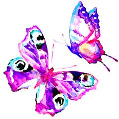 butterfly601