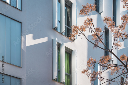 Fotomural Branches of a tree near of the windows of a modern building