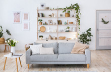 Cozy Design, Light Wall, Wooden Floor, Blue Sofa And Plants In Pot.