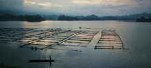 High Angle View Of Oyster Farm...