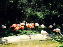 Flamingos Standing In Park During Sunny Day