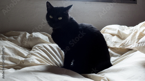 Canvastavla Portrait Of Black Cat Relaxing On Bed At Home