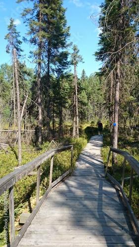 Boardwalk Amidst Trees At Algonquin Provincial Park Canvas Print