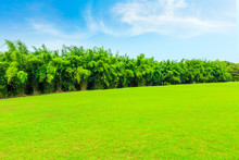 Green Grass And Bamboo Forest ...