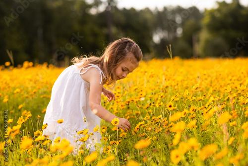 Fotografía Little toddler girl in a white dress picking flowers in a black eye Susan flower field