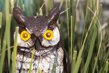 Fake Plastic Garden Owl Sitting In Green Grass With Orange Eyes