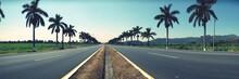 Empty Roads Along Palm Trees