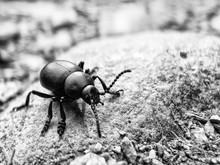 Bug On Rock