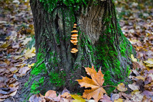 Close-up Of Lizard On Tree Trunk In Forest During Autumn