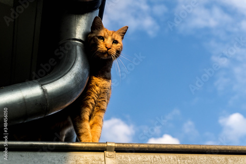 Photo a cats life
