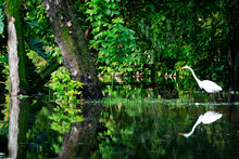 Great Egret Perching In Lake