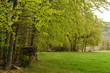 skład drzewa