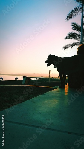 Fotografia Silhouette Dog Standing On Beach