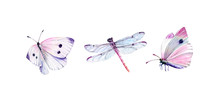 Watercolor Set Of Dragonfly An...