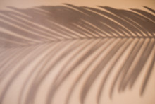 Shadow Of Palm Leaf On Natural Earthy Colors Background. Creative Drawing Of Light And Shadow For Your Design