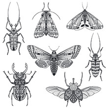 Vector Collection Of Hand Drawn Insects, Moth, Butterfly, Beetle, Bug.
