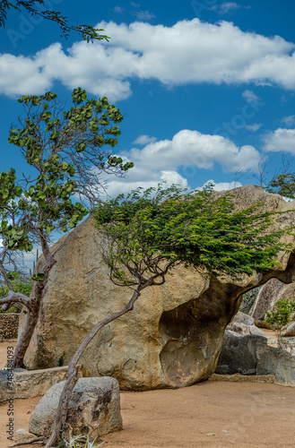 Платно Boulders, Divi Divi Trees and Cactus in Aruba Garden