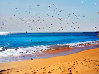 Fototapeta Ptaki Beach in Portimao, Portugal.