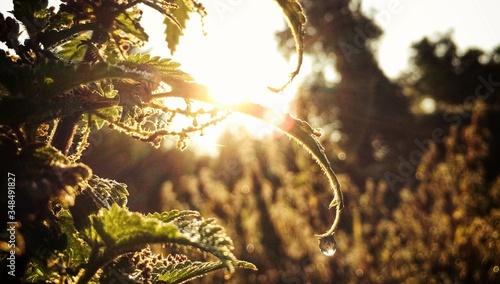 Fotografía Wet Sunlight Falling On Plants In Forest