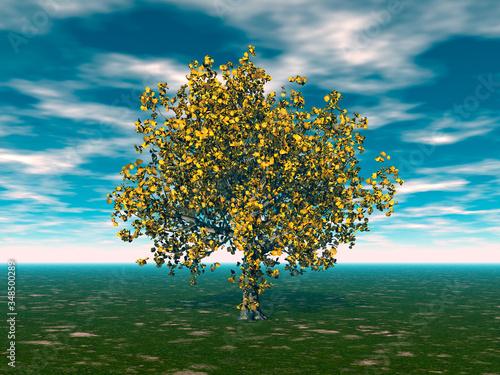 Fotografie, Obraz großer Laubbaum mit ausladender Krone auf der Wiese