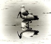 Symmetrical View Of Birds In Water
