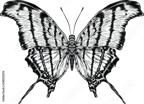 monarch butterfly black and white coloring Wallpaper Mural