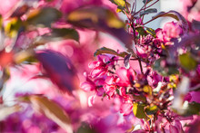 Close-up Of Fresh Purple Flowers Blooming On Tree