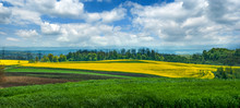 Panoramic View Of Agricultural...