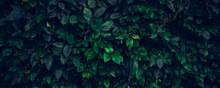 Dark Green Leaves, Abstract Fl...