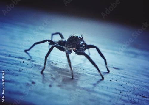 Fotografija Close-up Of Spider