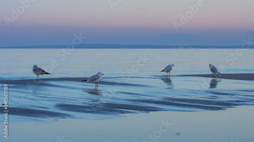 Obraz Möwen am Strand / im Wasser der Ostsee auf Usedom - fototapety do salonu