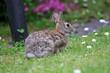 Leinwandbild Motiv coniglietto selvatico nel prato verde