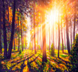 Oil painting - spring forest trees. nature green wood sunlight backgrounds illustration.
