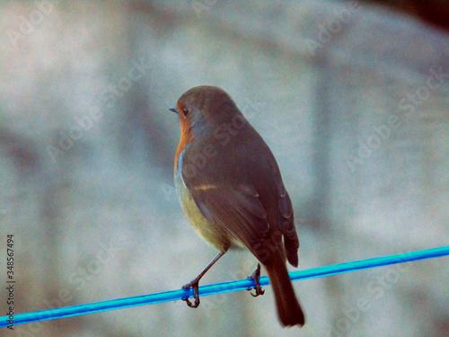 Fotografia Robin Redbreast On Railing Against Blurred Background